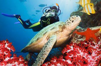 Mergulho em Fernando de Noronha: Guia com os melhores points