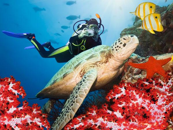 006b57db3 Guia de mergulho em Fernando de Noronha: os melhores points