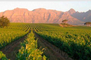 Melhores Adegas na África do Sul