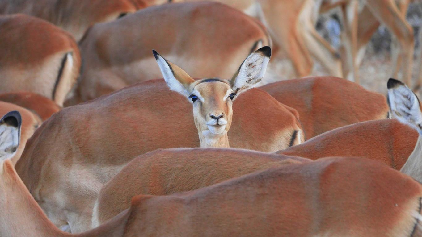 Blog Quênia e a Tanzânia: palcos da maior migração de animais do planeta