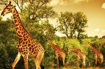 Quênia e a Tanzânia: palcos da maior migração de animais do planeta
