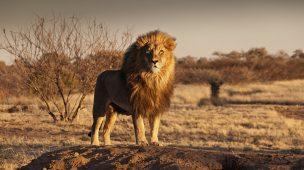 Namíbia: um dos países menos povoados do mundo guarda surpresas inesquecíveis