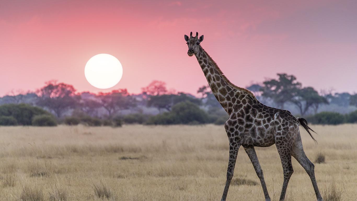 Botswana: A vida selvagem preservada sob leis rígidas