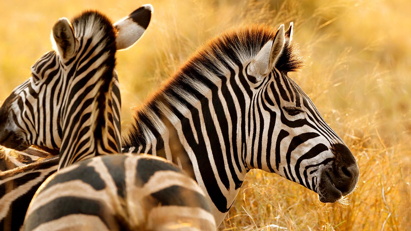 Conheça o Kruger Park, na África do Sul: um dos mais famosos do planeta