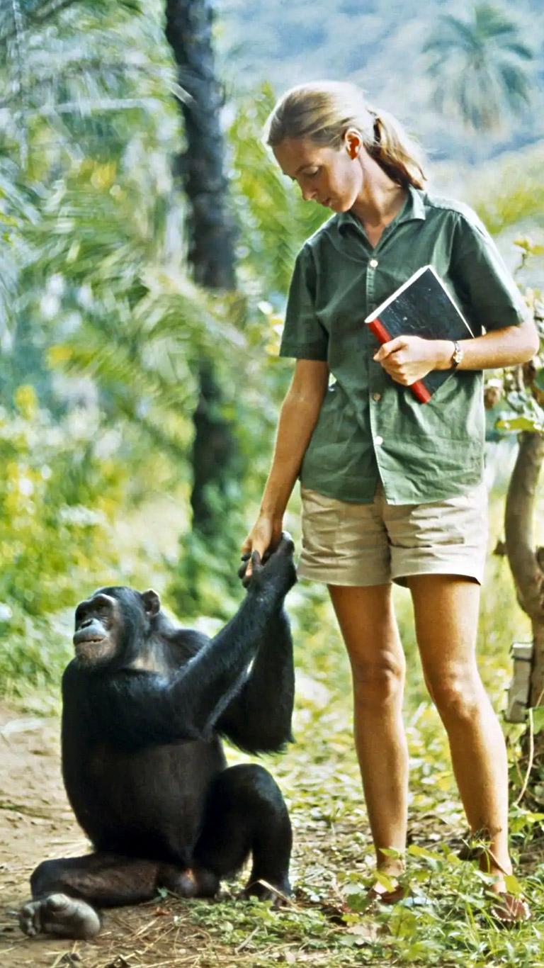 Jane Goodall: revoluções científicas, superações, lutas contra o preconceito e preservação dos Chimpanzés