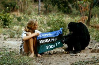 Jane Goodall: revoluções científicas, superações, lutas contra o preconceito e preservação dos Chipanzés