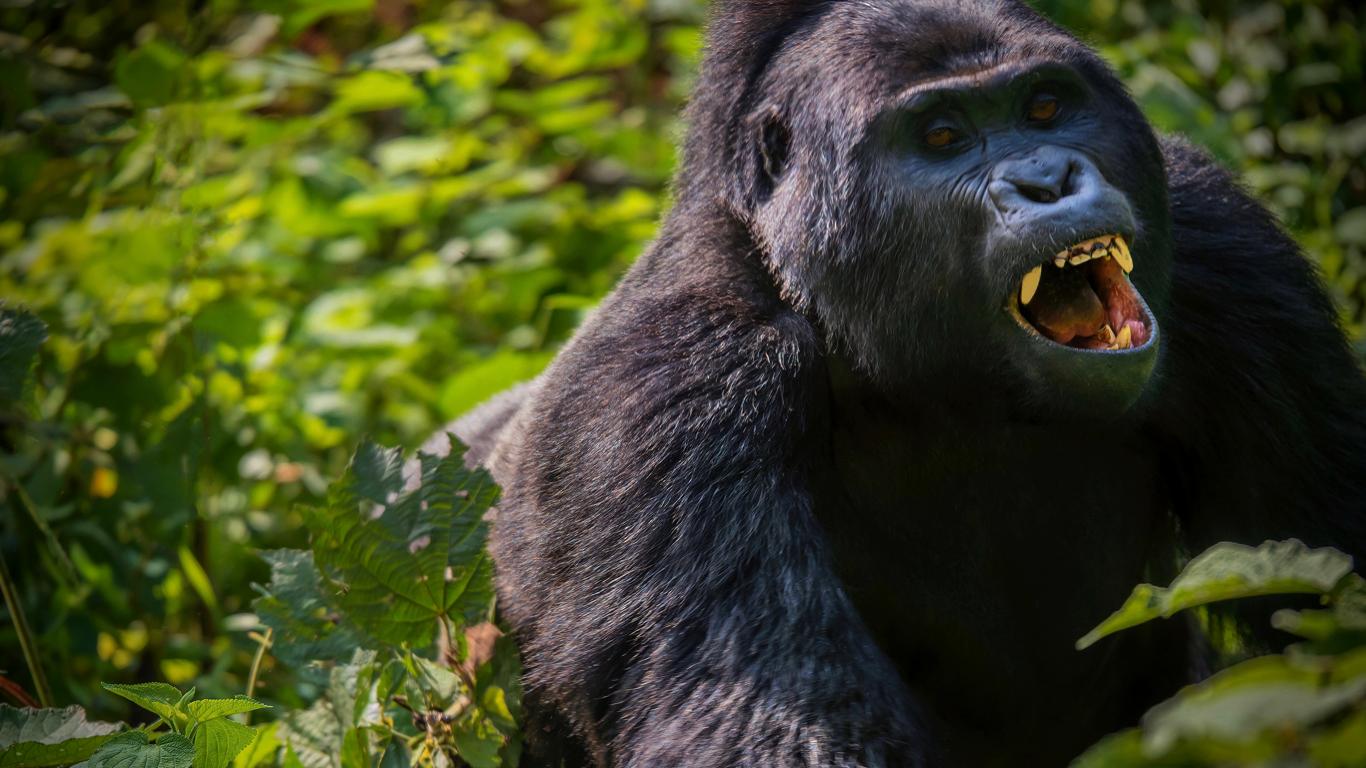 Parque Nacional Bwindi
