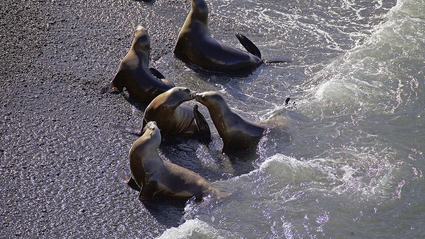Embarque para conhecer a incrível vida marinha da Patagônia Argentina