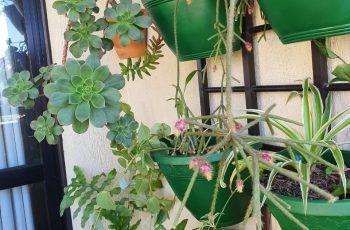 Plantas em casa: uma ótima forma de ficar em contato com a natureza