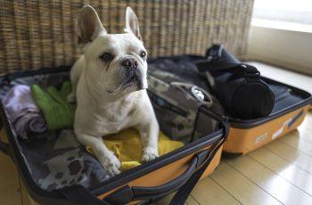 Dicas e cuidados para uma viagem internacional com o companheiro de quatro patas